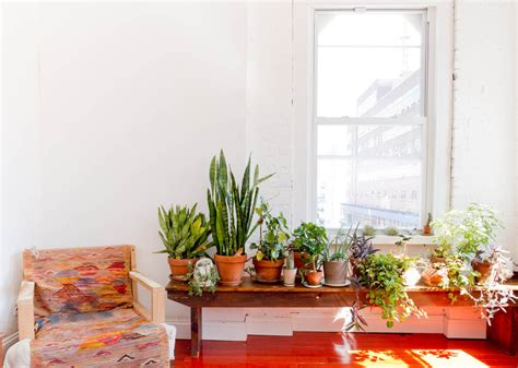 Indoor Plants Living Room Ideas by Innovative Percolator Coffee Pot In Living Room Eclectic