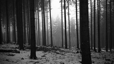 black and white woodland wallpaper arbres paysages noir et blanc for 234 t monochrome papier