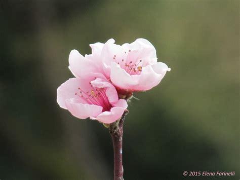 dei fiori la bellezza dei fiori anima e natura