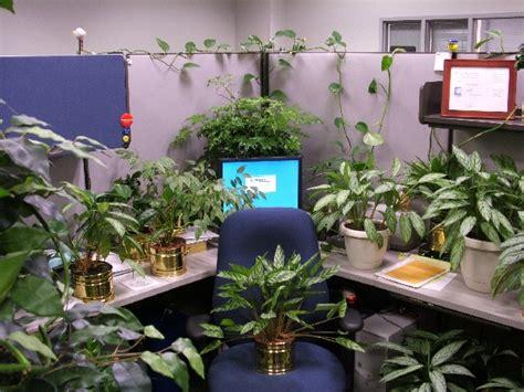 cubicle plants 25 awesome cubicle pranks holytaco