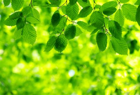 wallpaper of green leaves green tourism green leaves on green background