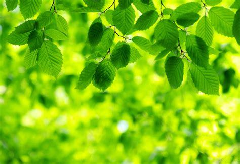 green images green leaves wallpaper wallpapersafari