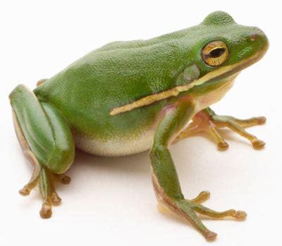 「frog」の検索結果 yahoo!検索(画像)