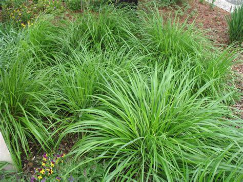 pin plane grass on pinterest