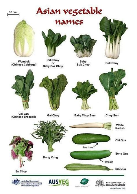 vegetables with english names 21 best images about cooking vocabulary on pinterest