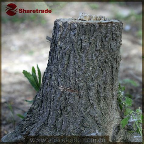 Decorative Tree Stumps by 2015 High End Wholesale Real Size Window Display Props