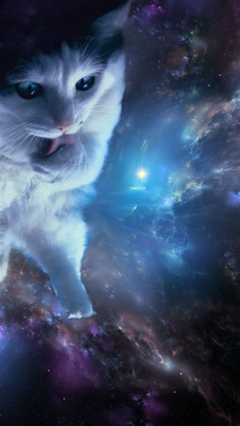 cat wallpaper for iphone 6 space cat wallpaper iphone wallpapersafari