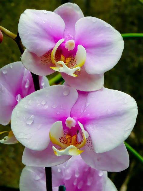 top 28 fertilizer for orchids phalaenopsis