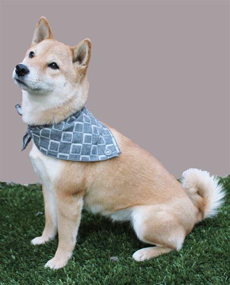 design milk dog dog bandanas from max bone dog milk