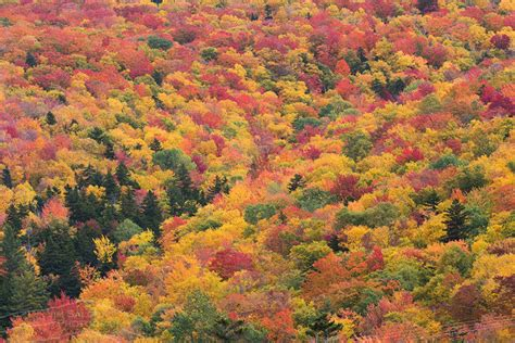 fall colors 2017 2017 new england fall foliage forecast new england today