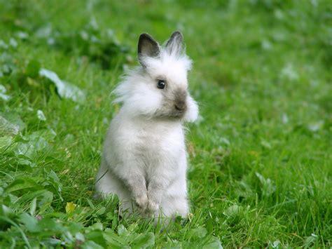 wallpaper cute rabbit bunny wallpaper adorablay animals