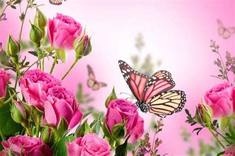 imagenes mariposas con rosas coloridas mariposas entre las flores 31461
