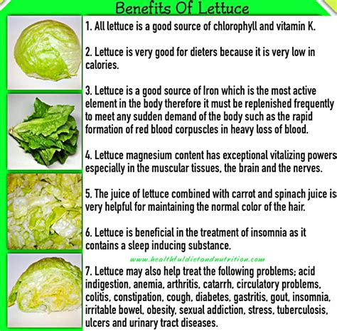 carbohydrates lettuce carbohydrates in romaine lettuce all articles about
