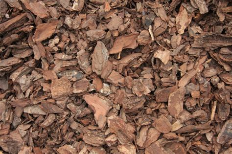 related keywords suggestions for mulch chips