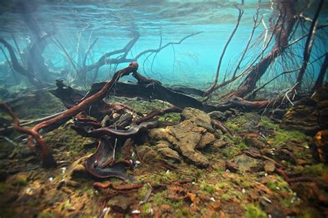 26 best images about nature aquarium sulawesi biotope on