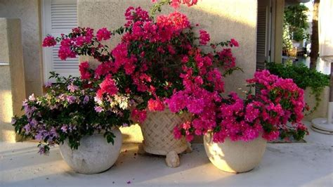 vasi in plastica per fiori vasi per fiori vasi per piante tipologie vasi