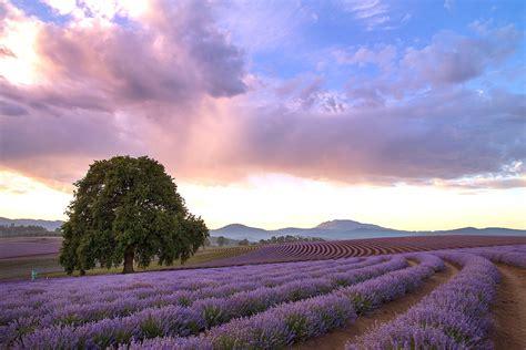 seasons at bridestowe lavender estate bridestowe