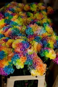 carnation colors rainbow carnations playful colors that make me happy