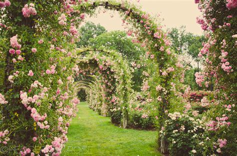 Kitchen Wall Mural elizabeth park rose garden in hartford connecticut