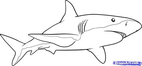 how to draw a doodle shark how to draw a shark step by step fish animals free
