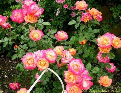 Buku Musim Dingin Di Rimba Besar buku harianq 8 varietas mawar yang cantik dan unik