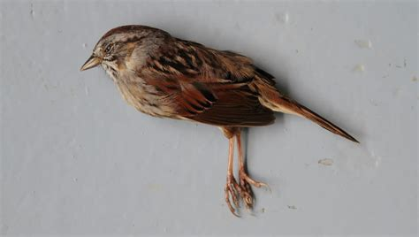 mesmerizing photos mesmerizing photos of dead birds killed by our cities