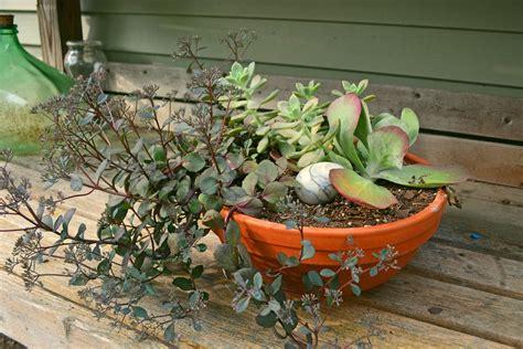 composizioni piante grasse in vaso realizzare composizioni di piante grasse le piante