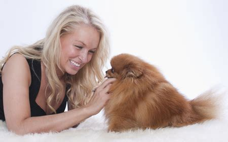 chemotherapy for dogs cost canine lymphoma chemotherapy side effects canine lymphoma
