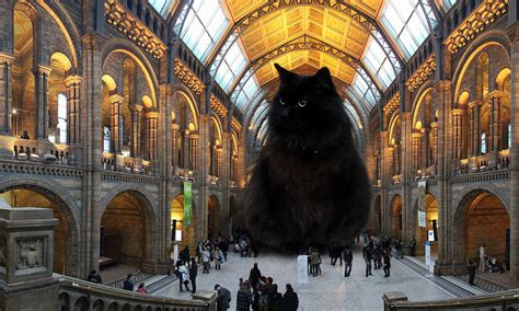 amsterdam museum of natural history london s natural history museum unveils replacement for ic