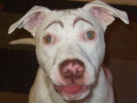 do dogs eyebrows dogs with eyebrows 27 pics