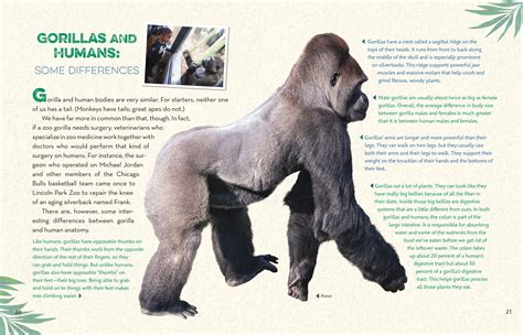 Eastern Gorilla Endangered Picture And Images