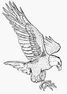 sea eagle coloring page drawn eagle man pencil and in color drawn eagle man