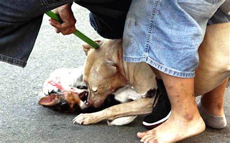vicious attacks pitbull attacks