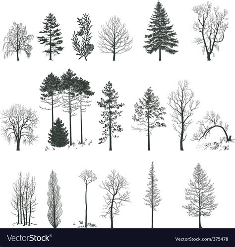 Tree Silhouette Collection Royalty Free Vector Image Ancestry Stock Images Royalty Free Images Vectors