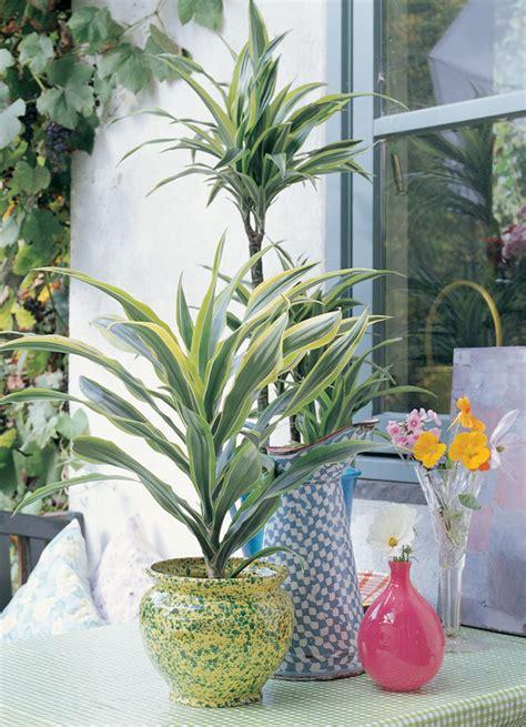 cuidado plantas interior 10 s 250 per consejos para cuidar tus plantas de interior y