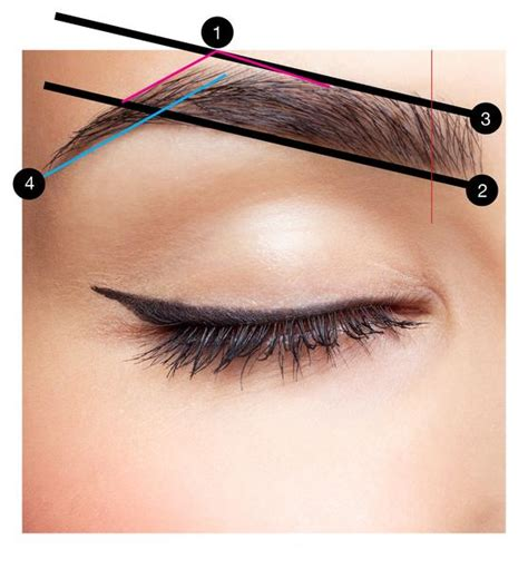 a visual guide to eyebrow shapes beautiful brow basics a complete guide to perfect brows