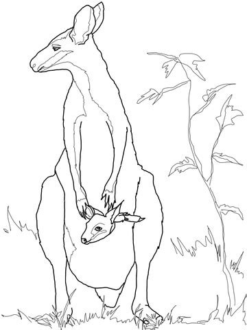 wallaby coloring page printable wallaby baby with mother coloring page supercoloring com