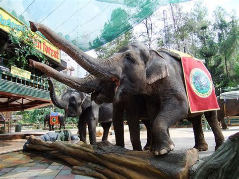 Taman Safari Cisarua wisata taman safari bogor puncak yang wajib dikunjungi