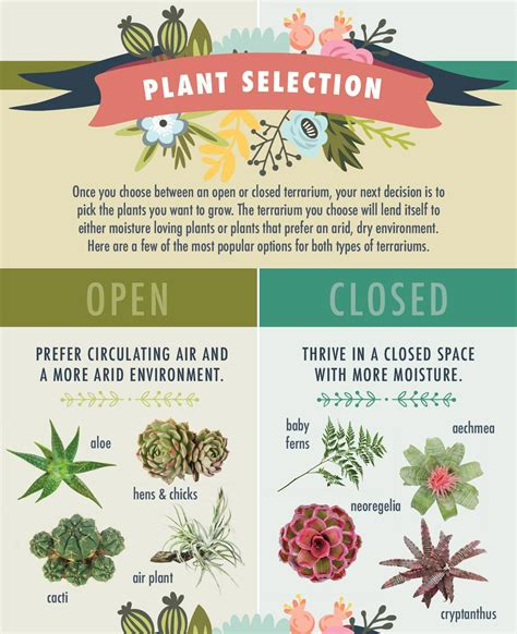 best plants for closed terrariums the best plants for open vs closed terrariums click for more terrarium tips terrariums