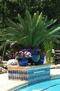1000 images about potted plants for pool area on pinterest pools planters and pool landscaping