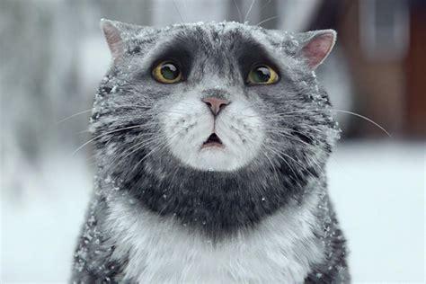 cat wallpaper john lewis sainsbury s mog the cat christmas advert on track to beat