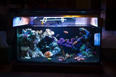 Aquarium Design With Black Sand | reef tank with black sand reef tanks pinterest black