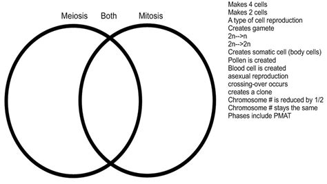 meiosis mitosis venn diagram test study guide ms walker s biology page