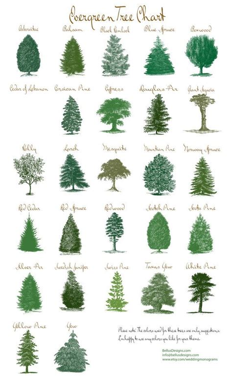 types of trees 25 best ideas about evergreen trees landscaping on