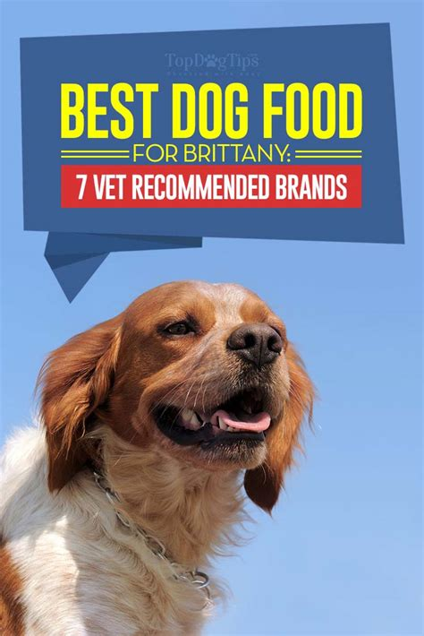 best food for dogs best food for 7 vet recommended brands