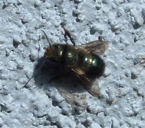 native bees who are they what they do and how to keep