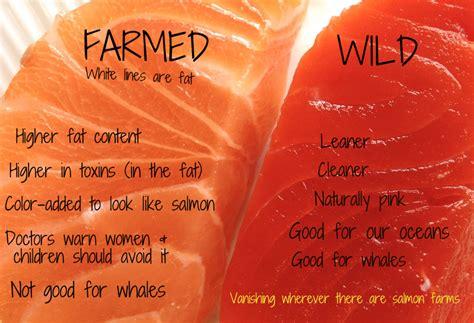 cooked salmon color vs farmed salmon akd