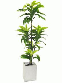Plants That Don T Need Sunlight Indoor Plants That Don T Need Sunlight Mypowerruns Com