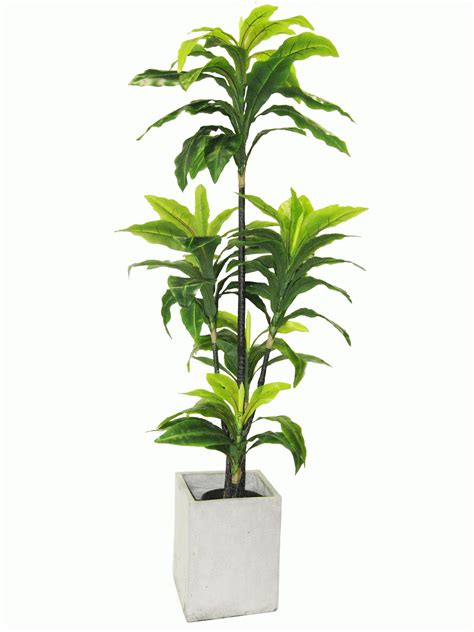Indoor Plants by Newturf Solutions Newturf Introduce Indoor Plants