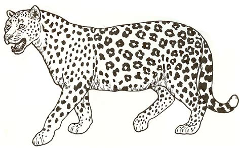 Leopard Print Coloring Pages leopard coloring